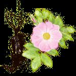 Экстракт корней дикой розы